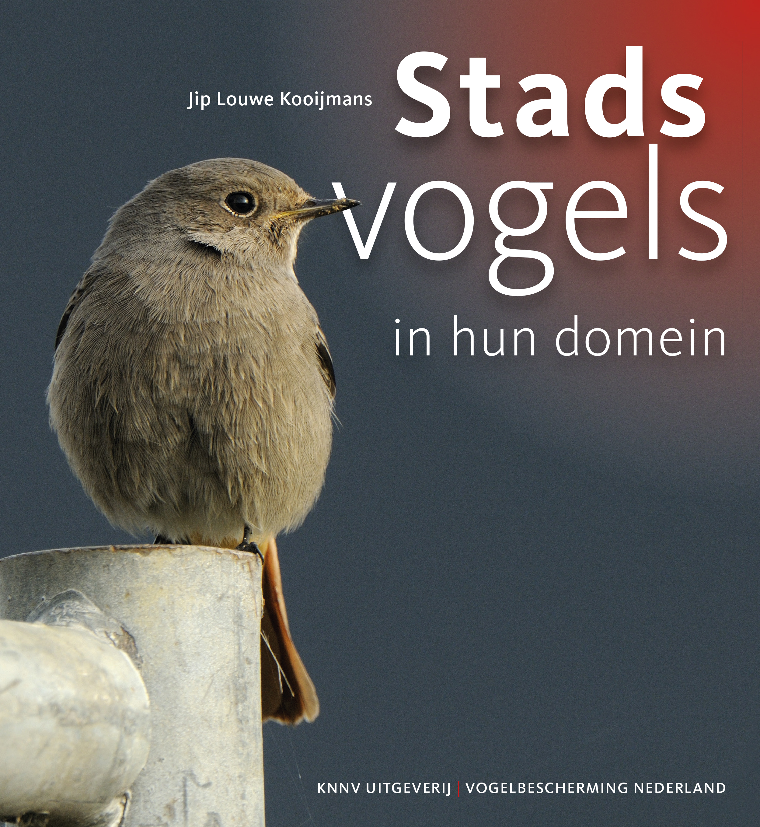 Stadsvogels in hun domein