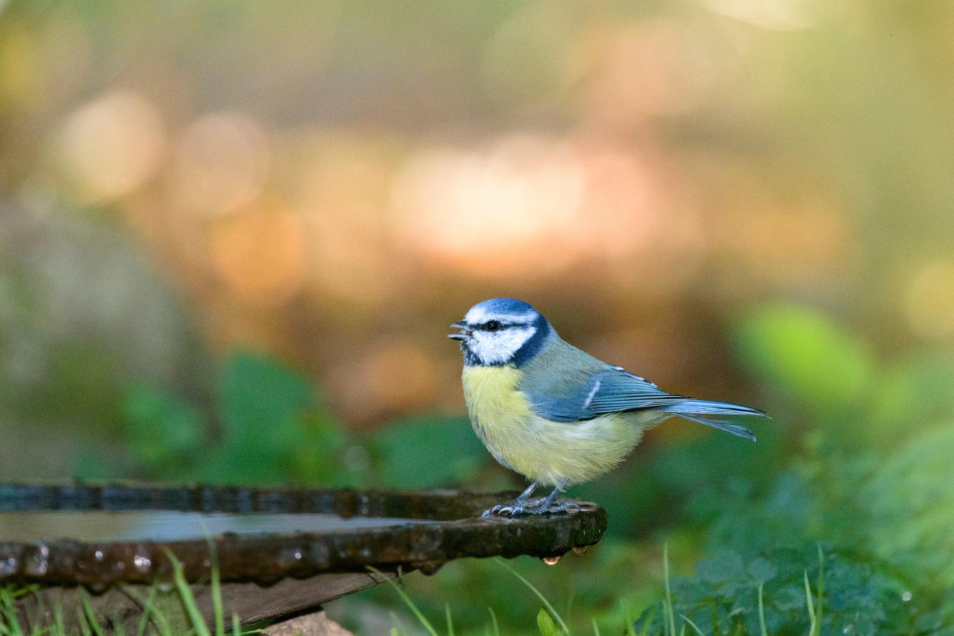 Mijn vogeltuin